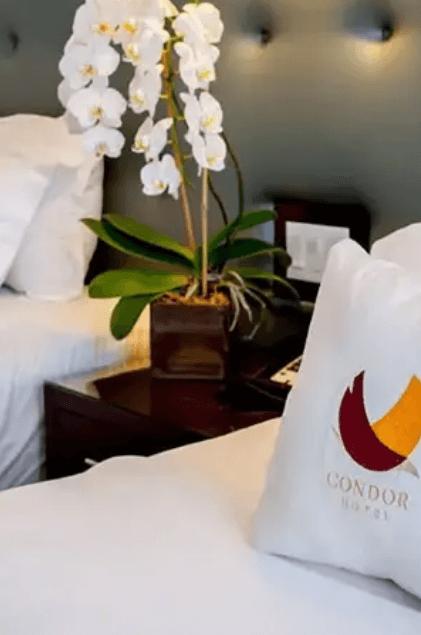 Condor pillow